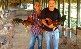 Cockfighting-Tour-Bachelor-Party-Cartagena-5